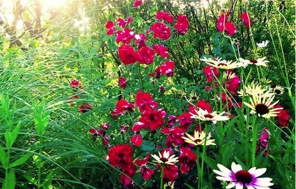 Jardín natural ruta por los sentidos