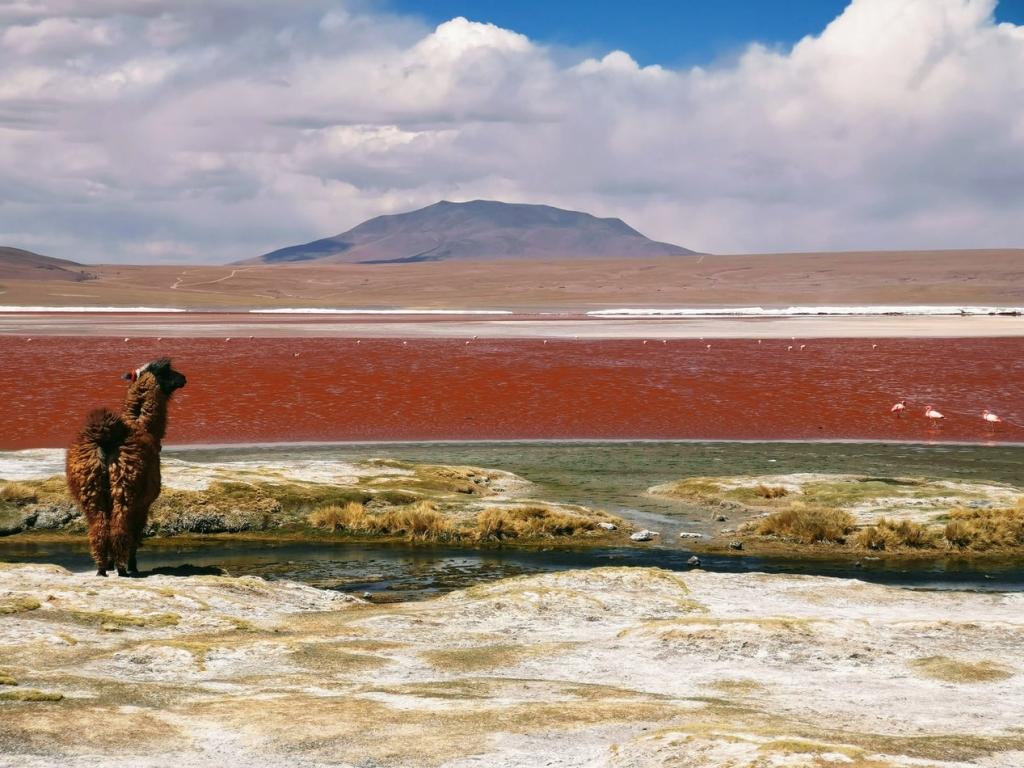 Luna de miel en Bolivia
